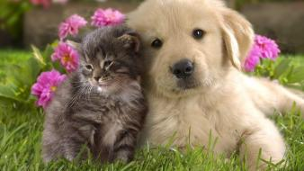 Animals puppies kittens wallpaper