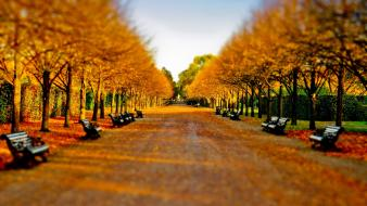 Autumn (season) leaves bench tilt-shift parks wallpaper
