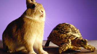 Bunnies animals racing tortoise fun Wallpaper