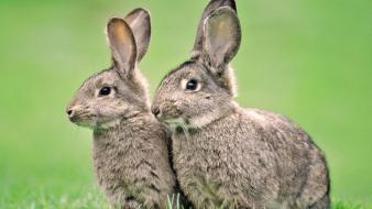 Bunnies nature animals grass rabbits wallpaper