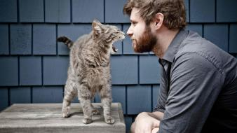 Cats men people beard fun wallpaper