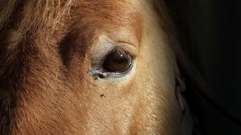 Eyes fur textures horses Wallpaper