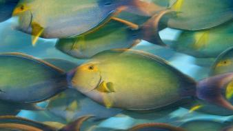 Fish national geographic wallpaper