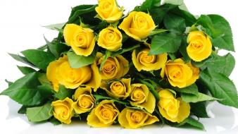 Flowers yellow bucket roses Wallpaper