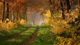 Landscapes nature forest path roads Wallpaper