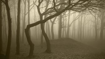Landscapes nature trees wood forest fog trunks gloomy wallpaper