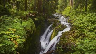 Landscapes nature wood leaves falls moss protection wallpaper