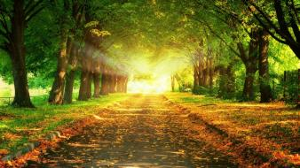 Light sun trees parks colors wallpaper