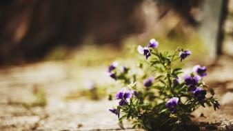 Nature flowers depth of field purple blurred background wallpaper