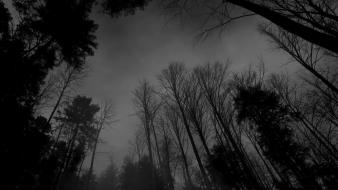 Nature trees dark forest wallpaper
