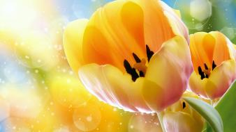Nature yellow tulips wallpaper