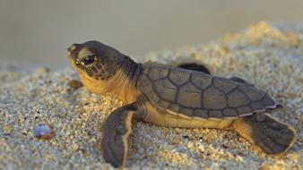 Sand animals turtles baby wallpaper