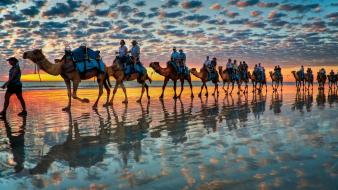 Sunset clouds beach animals camels reflections Wallpaper
