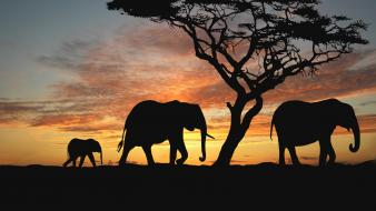 Trees animals silhouette elephants herds wallpaper
