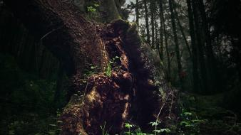 Trees forest tree trunk wallpaper