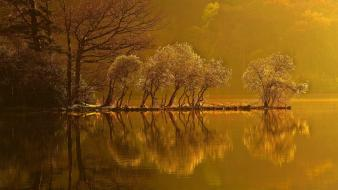 Water landscapes nature trees yellow young ripples wallpaper
