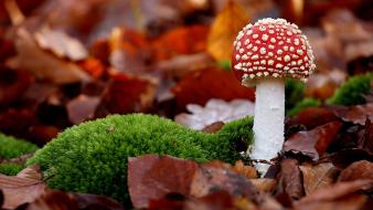 Autumn (season) mushrooms moss wallpaper