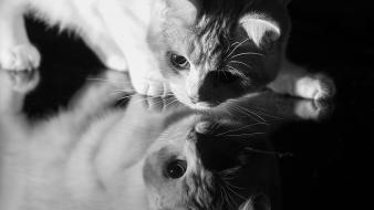 Black and white cats animals grayscale wallpaper