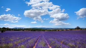 Clouds landscapes flowers fields lavender purple Wallpaper