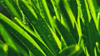 Green close-up grass macro drops wallpaper