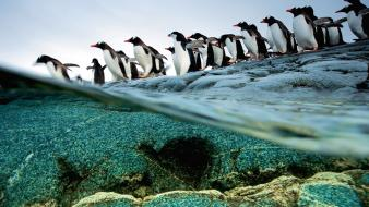 Nature animals penguins national geographic wallpaper