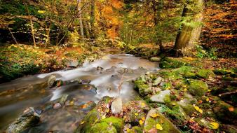 Nature forest rivers autumn wallpaper
