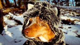 Nature winter snow animals dogs funny scarfs friend wallpaper