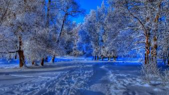 Nature winter trees wallpaper