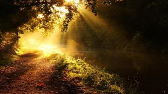 Sun forest path golden morning creek wallpaper