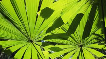 Beach australia palm leaves wallpaper