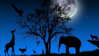 Elephants ostrich blue background giraffes night sky wallpaper