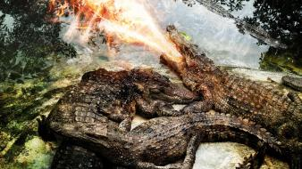 Fire crocodiles reptiles photomanipulation Wallpaper