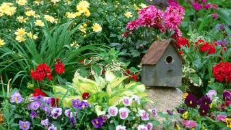 Flowers garden pansies birdhouses wallpaper