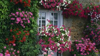 Garden summer france farmhouse brittany wallpaper
