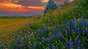 Landscapes garden hills california wildflowers wallpaper