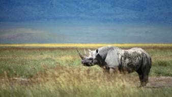 Nature animals rhinoceros wallpaper