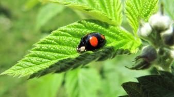 Nature insects leaves ladybirds wallpaper