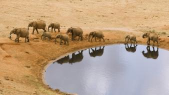 Water animals hole elephants african baby elephant Wallpaper