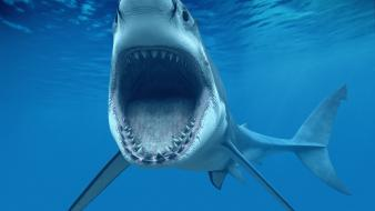 Animals cgi sharks teeth roar underwater world wallpaper