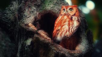 Birds owls tree trunk wallpaper