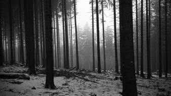 Black and white landscapes trees forest monochrome Wallpaper