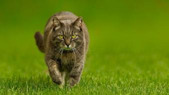 Cats animals grass wallpaper