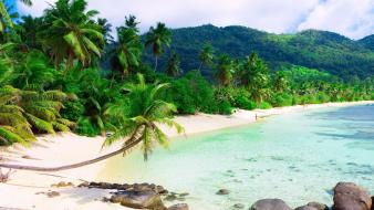 Coast beach stones palm trees resort tropics wallpaper