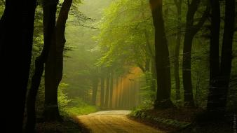 Forest roads national park the netherlands mystic wallpaper