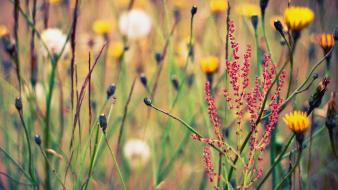 Grass depth of field wildflowers wallpaper