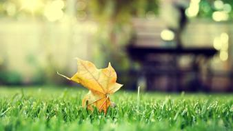 Green nature leaves grass tilt-shift Wallpaper