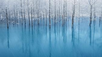 Ice nature forest wallpaper