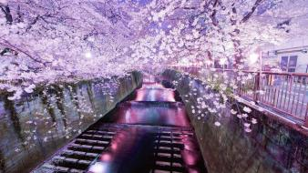 Japan cherry blossoms tokyo cityscapes wallpaper