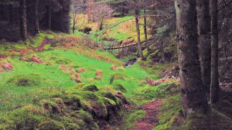 Landscapes trees forest ireland europe moss wallpaper