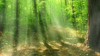 Light landscapes nature sun trees beams inspiration wallpaper